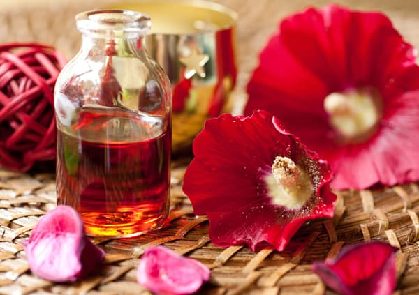 Essential Oil for aromatherapy and red flowers